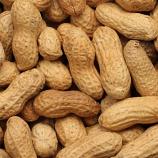 50lb Bag Roasted Peanuts